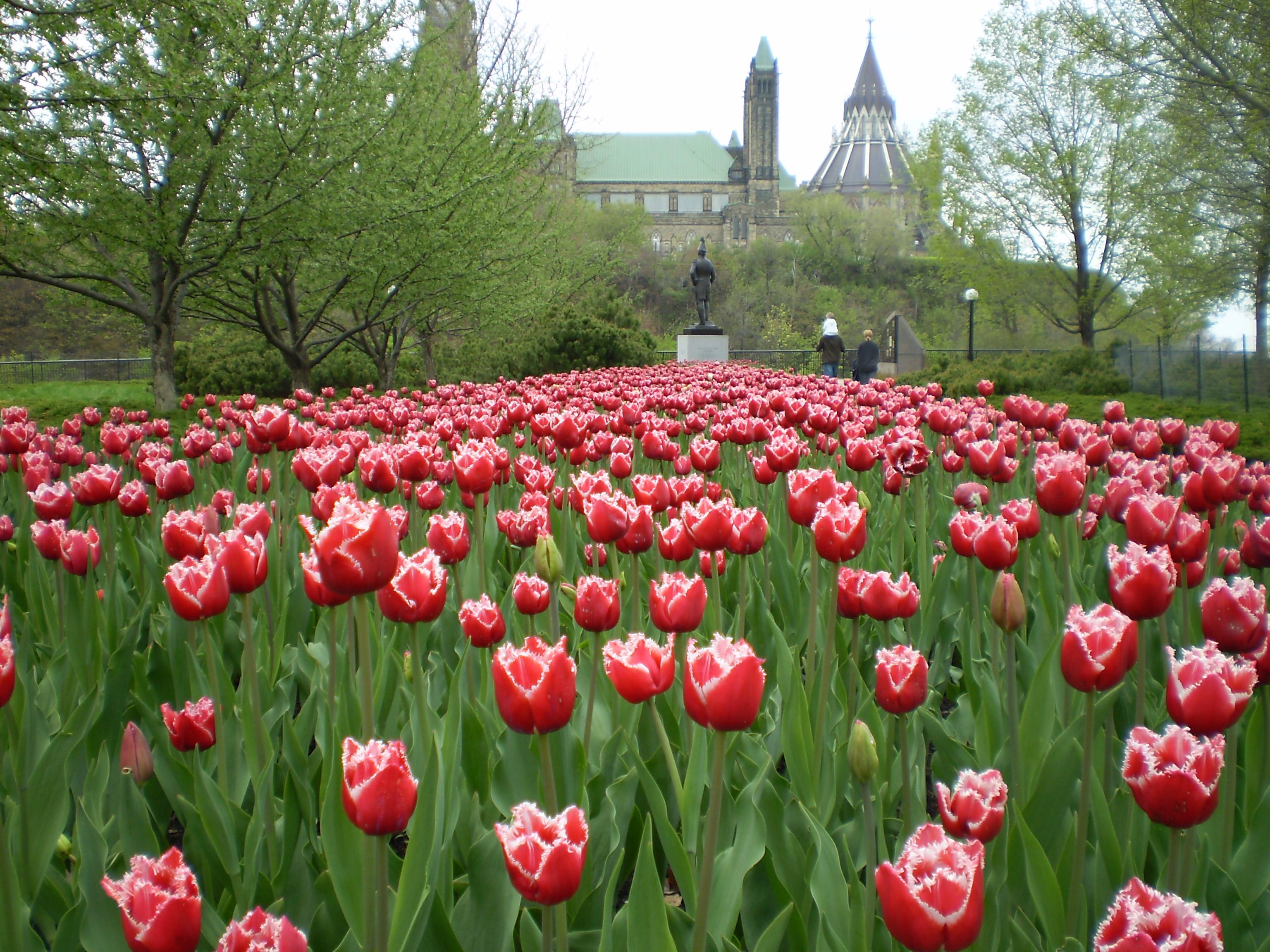 Tavasz és tulipánfesztivál Ottawában
