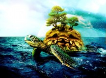 Válasszunk teknőspolgármestert