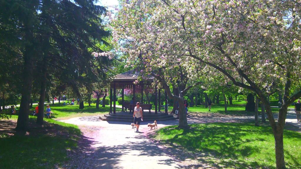 Westmount Park. A park mai változatát 1912-ben alakította ki J. Howard Manning. Fotó: Christopher Adam/KMH.
