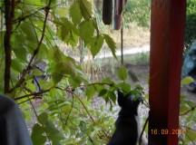 Stefan Stefanovics és a macskák