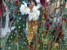 Menekülés a montreáli Botanikus kertbe (képriport)