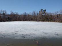 Végre tavaszodik Ottawában — Egy séta a Caldwell-Carver természetvédelmi területen