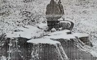 A szakszerűtlen fakitermelés nem kegyelmezett egy ritka, matuzsálemi bükkfának sem.