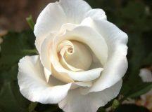 Kertészeti: Nyílt levélként a polgármestereknek