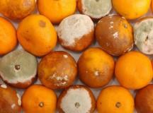 Rohad a narancs